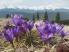 походы в горы весной